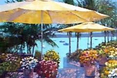 Caribbean Overlook